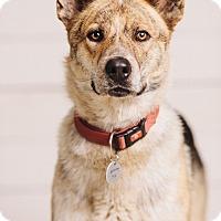 Adopt A Pet :: Ki - Portland, OR