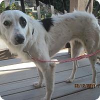 Adopt A Pet :: BREEZY - La Mesa, CA