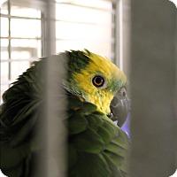 Adopt A Pet :: Candy - Punta Gorda, FL