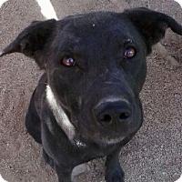 Adopt A Pet :: Albilene - Las Vegas, NV