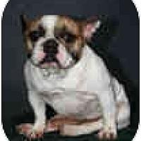 Adopt A Pet :: Apollo - conyers, GA