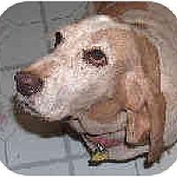 Adopt A Pet :: Maggie May - Phoenix, AZ