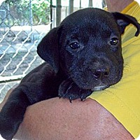 Adopt A Pet :: BILLY B - Glastonbury, CT