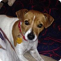 Adopt A Pet :: Sara in Houston - Houston, TX