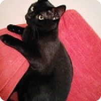 Adopt A Pet :: Switzer - Vancouver, BC