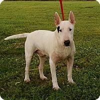 Adopt A Pet :: Austin - Glenwood, AR