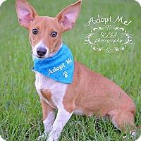 Adopt A Pet :: Yazu - Fort Valley, GA
