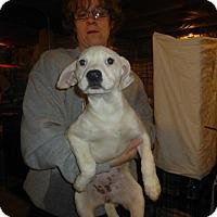 Adopt A Pet :: Leslie - Glastonbury, CT