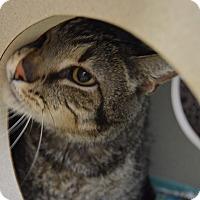 Adopt A Pet :: Cowboy - Buena Vista, CO
