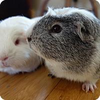 Adopt A Pet :: Taco & Ace - Fullerton, CA