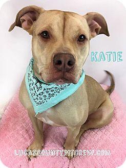 Labrador Retriever/American Pit Bull Terrier Mix Dog for adoption in Toledo, Ohio - Katie