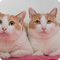 Adopt A Pet :: Spud - Ashland, MA