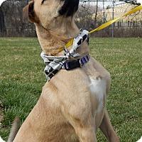 Adopt A Pet :: Tonto - Bucyrus, OH