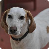 Adopt A Pet :: ZERO (great family dog!) - New Smyrna Beach, FL