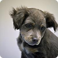 Adopt A Pet :: Cruz - Southington, CT