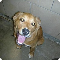Adopt A Pet :: Jensen - Eureka Springs, AR