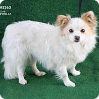 Adopt A Pet :: A092360 - Hanford, CA
