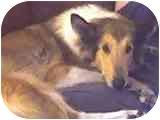 Collie Dog for adoption in Gardena, California - Cookie