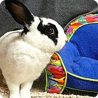Adopt A Pet :: Holden - Newport, DE