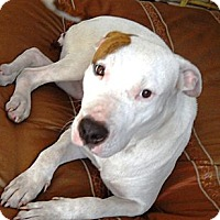 Adopt A Pet :: LILLY - Hollywood, FL