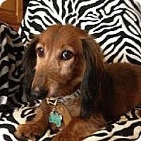 Adopt A Pet :: Siler - Atascadero, CA