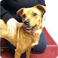 Adopt A Pet :: BRANDI - Dennis, MA