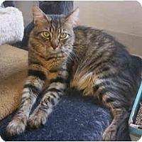 Adopt A Pet :: Lucky Boy - La Jolla, CA