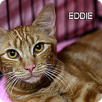 Adopt A Pet :: Eddie - Albuquerque, NM