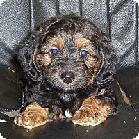 Adopt A Pet :: Beatrice - Greenville, RI