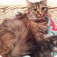 Adopt A Pet :: Scarlett - Harrisburg, NC