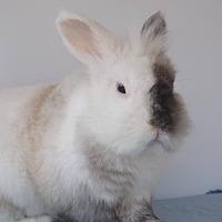 Adopt A Pet :: Binky - Hahira, GA