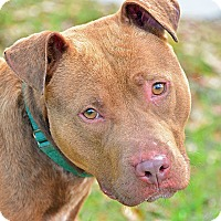 Adopt A Pet :: JACK - Brooksville, FL