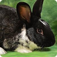 Adopt A Pet :: Pietro - Evansville, IN