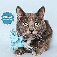 Adopt A Pet :: Paulina at Woodhaven Petsmart - Wyandotte, MI