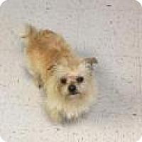 Adopt A Pet :: Smitty - Shawnee Mission, KS