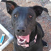Adopt A Pet :: Brandi - Arenas Valley, NM