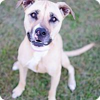 Adopt A Pet :: Brooklyn - Dublin, OH