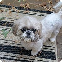 Adopt A Pet :: Monty-Adoption pending - Bridgeton, MO