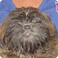 Adopt A Pet :: Franco - Salem, NH