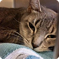 Adopt A Pet :: Mama Girl - Sewaren, NJ