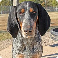 Adopt A Pet :: Fiona - Savannah, TN