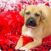 Adopt A Pet :: Sneezy - Lexington, TN