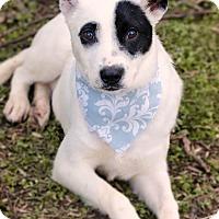 Adopt A Pet :: Kujoe meet me 3/24 - Manchester, CT