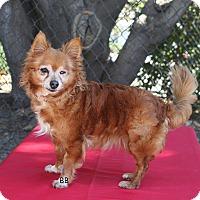 Adopt A Pet :: Vivi - Santa Barbara, CA