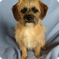Adopt A Pet :: Cammy - Temecula, CA