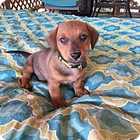 Adopt A Pet :: RICO - Portsmouth, NH