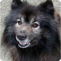Adopt A Pet :: Willie - Los Altos, CA