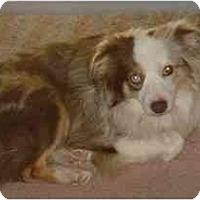 Adopt A Pet :: Derry - Orlando, FL