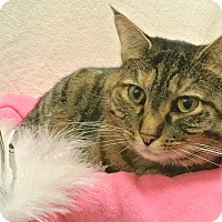 Adopt A Pet :: Lexie - Foothill Ranch, CA