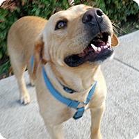 Adopt A Pet :: Mello - Coppell, TX